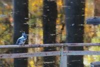 2020.11.22(1) - 鳥撮り遊び