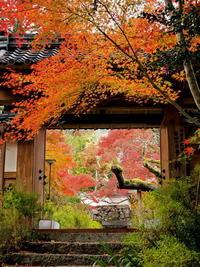 紅葉 16京都府 - ty4834 四季の写真Ⅱ