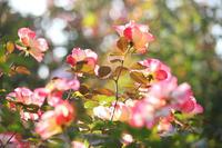 晩秋のイングリッシュガーデン【3】 - 写真の記憶