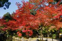 長岡天満宮の紅葉 - 写真を主とした日記です