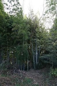 ニセアカシア伐採計画その1 - Studio Okamoto の 徒然日記