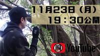明日19:30より、もっと公園で11月のクワガタに挑戦してみた続編YOUTUBE公開! - くわがた散歩道