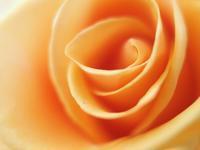 敷島薔薇園の秋薔薇ラスト - 光の 音色を聞きながら Ⅵ