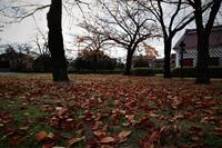 秋 - 日常・街歩記