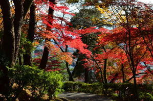 福井紅葉徘徊西山公園 -
