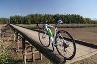 小貝川を福岡堰まで - pottering
