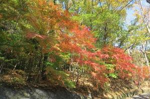 甲府・白山(八王子山)コウヤボウキの花 -