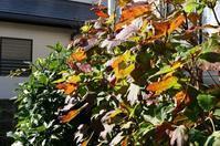 10月11月のお庭 - mille fleur の花とおやつ