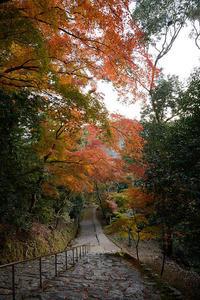 2020京都の紅葉・高雄神護寺 - デジタルな鍛冶屋の写真歩記