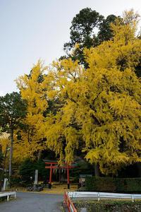 2020京都の紅葉・小野郷岩戸落葉神社 - デジタルな鍛冶屋の写真歩記