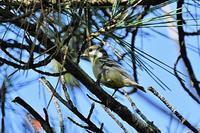 キバラガラ第2弾 - そらと林と鳥