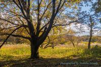 秋の高麗の里ロングウォーク - デジカメ写真集