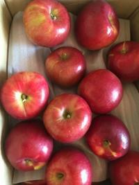 リンゴはやはり紅玉が好き - 花の自由旋律
