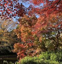 晩秋の都市公園-2ホソミイトトンボ確認 - オヤヂのご近所仲間日記