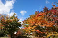 渋滞の日光を避けて栃木県民の森へ - ギャラリー☆花鳥風翼II