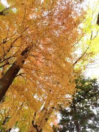 富士河口湖 紅葉まつり  ◆朝霧高原と河口湖⑤◆ - Emily  diary