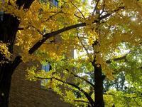 ちょっと自粛中・日本大通りの四季 - 神奈川徒歩々旅
