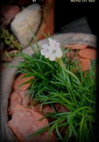 懐かしさ漂う花たち - どんぐりの木の下で……