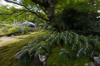 ホトトギスと秋の花咲く実光院 - 花景色-K.W.C. PhotoBlog
