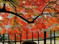 紅葉 17京都府 - ty4834 四季の写真Ⅱ