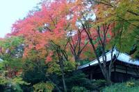 花の寺・久安寺 - 浜千鳥写真館