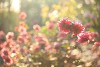 晩秋のイングリッシュガーデン【4】 - 写真の記憶