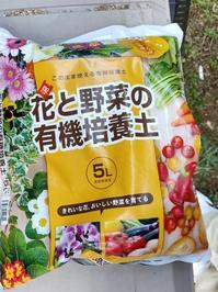 市販の培養土を使う2 - 猫屋の今日も園芸日和〜ギボウシ達の庭〜