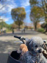 駒沢公園で野球していたhくん - Fran とDomagkのテーブル日記