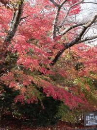 信州塩田平の紅葉(2) 信濃デッサン館 他 (2020/11/13撮影) - toshiさんのお気楽ブログ