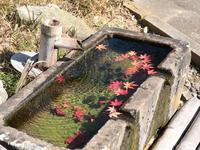 信州塩田平の紅葉(3) 大法寺 (2020/11/13撮影) - toshiさんのお気楽ブログ