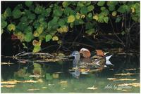 オシドリさんの池にて。 - 今日のいちまい