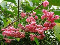 荒れ庭の花と実と三日月 - 花と葉っぱ