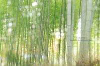 嵐山*Ⅱ - It's only photo 2