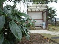 秋の庭しごとパスメイトの小径を伸ばす - シンプルで心地いい暮らし