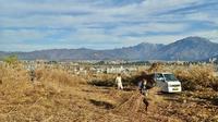 賽の神に使う萱を刈りました! - 浦佐地域づくり協議会のブログ
