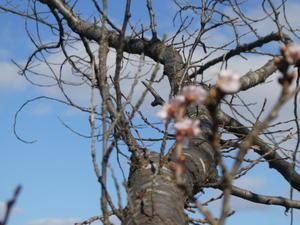 秋にさく桜 -