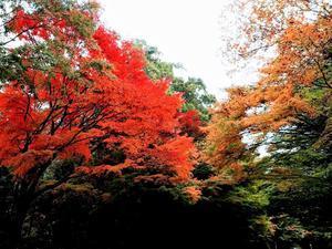 霧島の紅葉 - だんご虫の花
