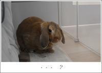 あっ・・・トイレ!!!と幻想的な空 - Living with rabbit