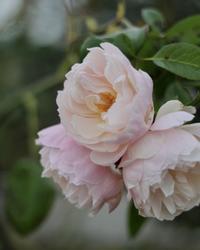 花のワルツさんの寄せ植え - ゆきなそう  猫とガーデニングの日記