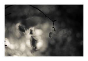 Leaf#48 -