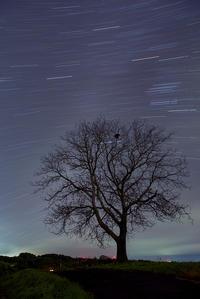 孤高の木に彩を - **photo cafe**