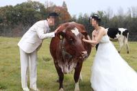 牛と一緒にウェディング??( ´艸`) - オヤコベントウ