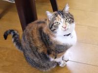 猫のお留守番 ゆめくん編。 - ゆきねこ猫家族