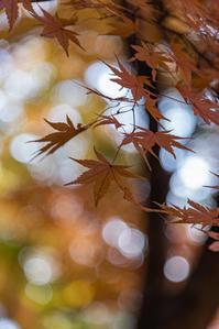 秋彩 2 - 気ままにお散歩