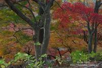 徳明園紅葉狩り#1 - 風の彩りー3