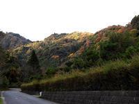 バードウオッチング in 大森 - 清治の花便り