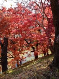 上田城跡公園の紅葉(2) (2020/11/13撮影) - toshiさんのお気楽ブログ