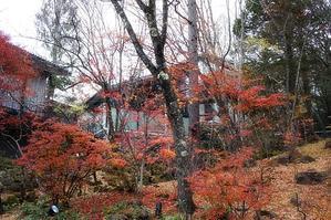 晩秋の林を歩く -