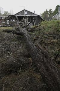 ニセアカシア伐採 二日目 - Studio Okamoto の 徒然日記