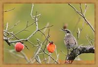 北摂の冬の野鳥たちを鳥×撮り【里山編】2020.11 - 鳥×撮り+あるふぁ~